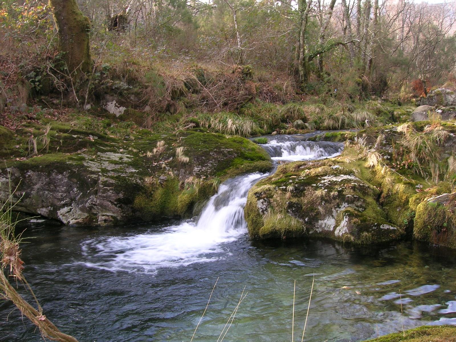 8. El bosque húmedo gallego. Autor, FreeCat