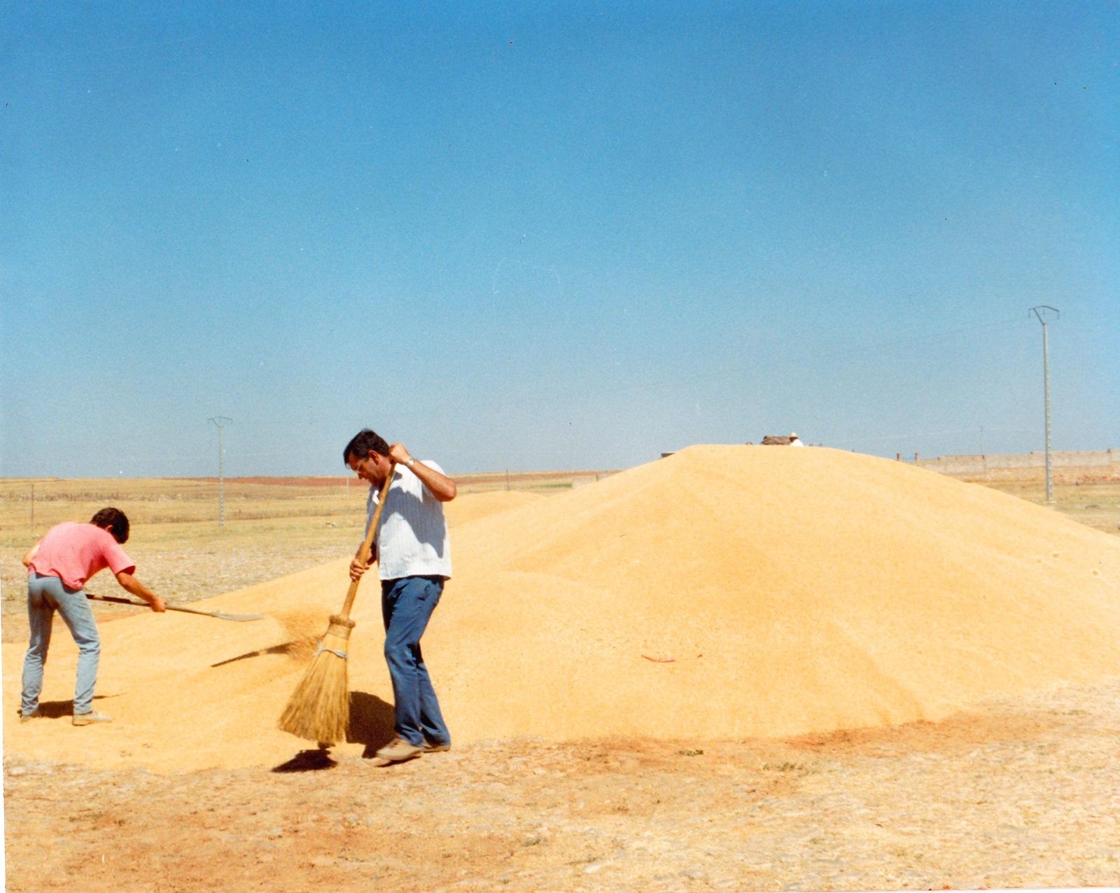 3. Limpiando el grano, una vez trillado. Autora, Plácida
