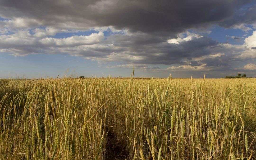 El oficio de separar el grano. Eras y trillas en La Mancha (2ª parte)