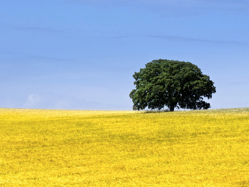 También un lugar de La Mancha. Autora, María