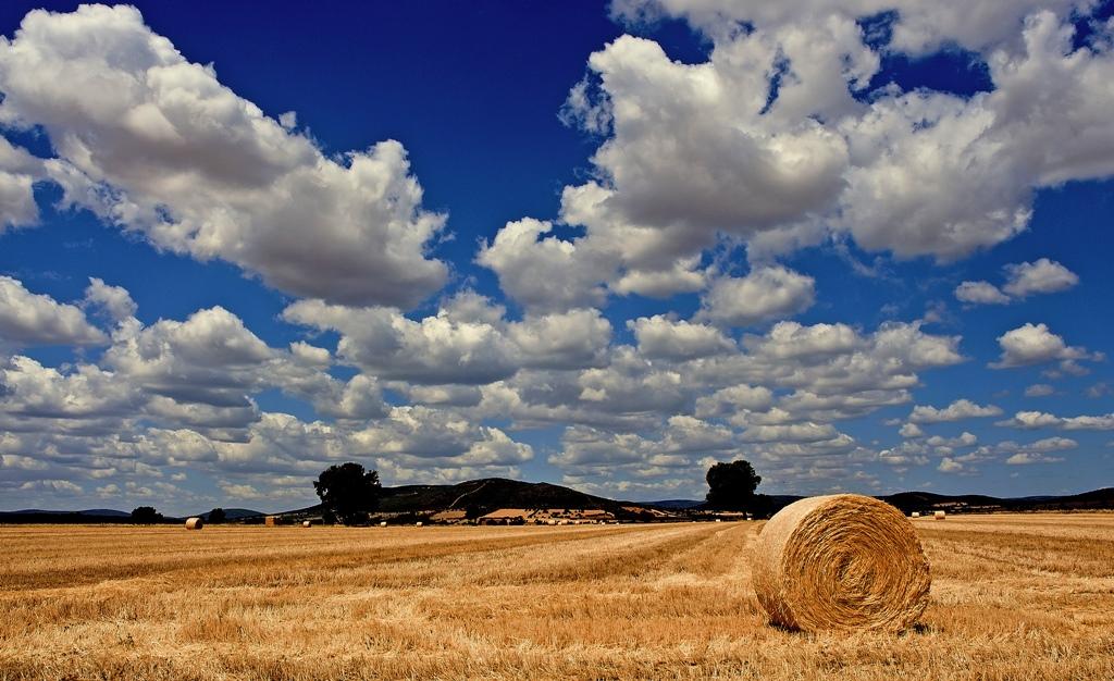 Paisaje de La Mancha. Autor, Ricardo Fernández