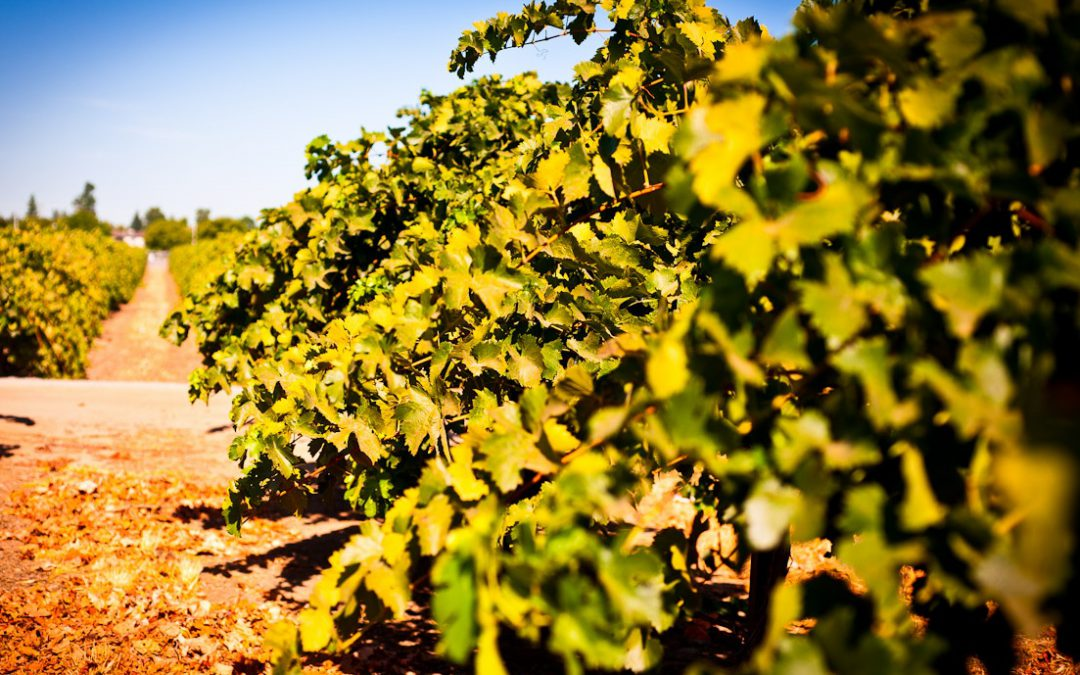 Tiempo de vendimia y vinos
