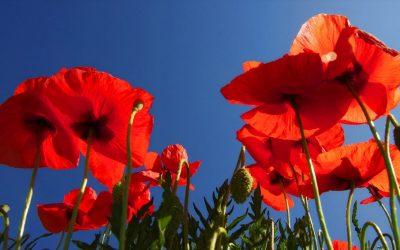 Primavera en el Campo de Montiel