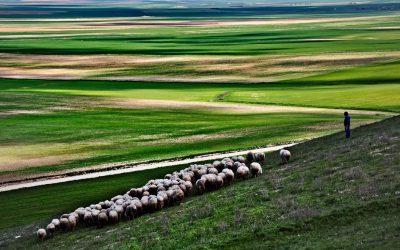 La Mancha trashumante. Hacia las dehesas del Sur (2ª Parte)