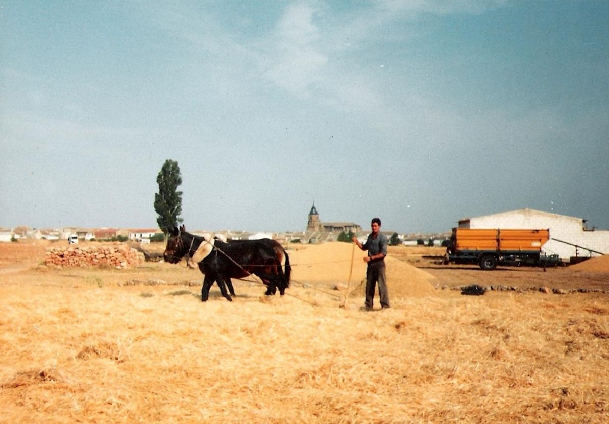 2. Trillando la parva en Villahermosa. Años ochenta. Autor, foto Arcángel Sánchez Briz