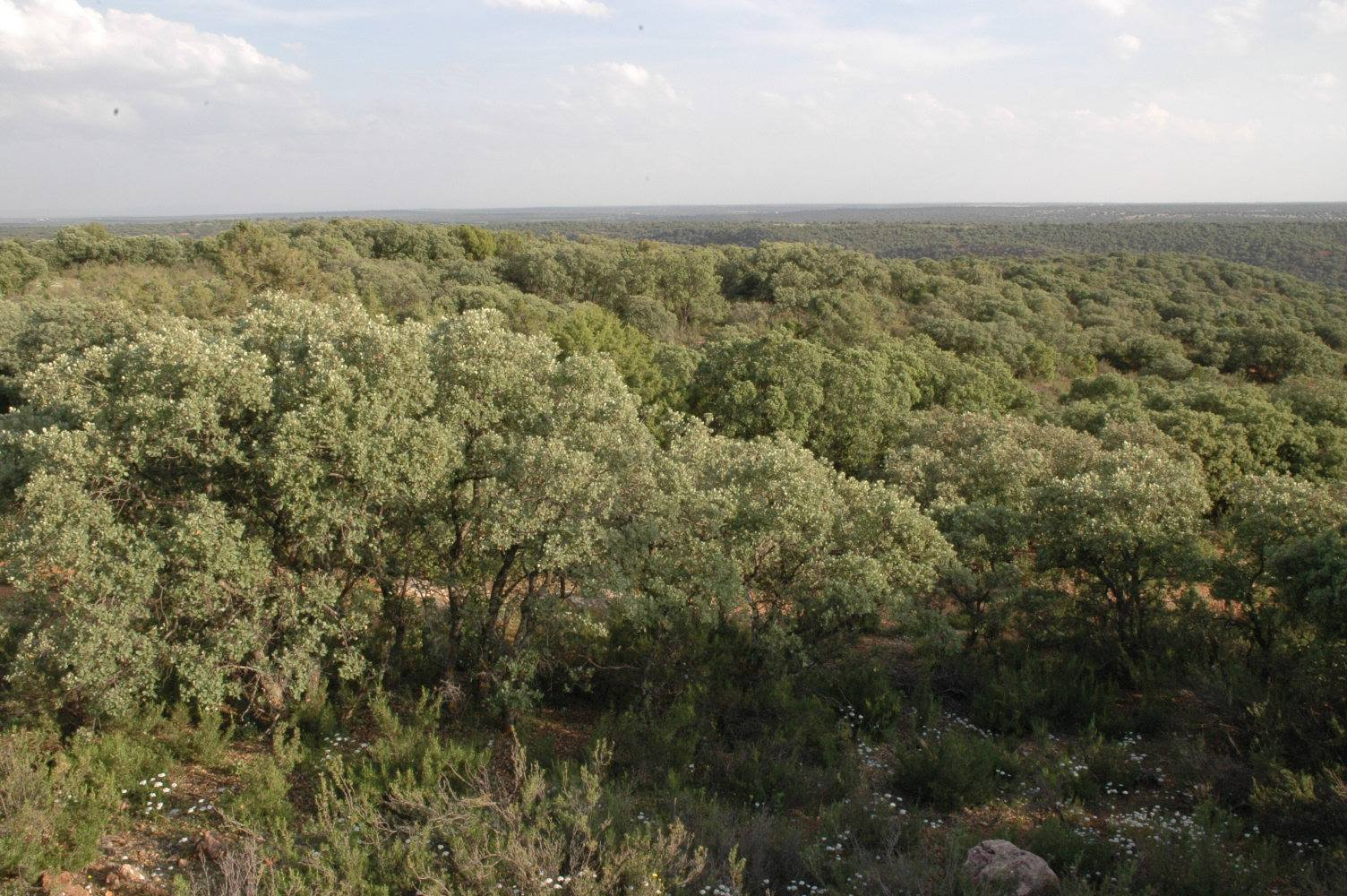 Bosque mediterráneo en el Parque Natural de las Lagunas de Ruidera