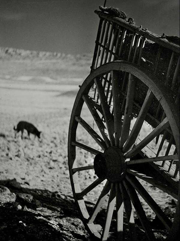 Carro con perro. Autor, Vicente Nieto Canedo