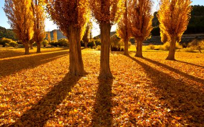 Filemón y Baucis. La leyenda del amor convertido en árbol
