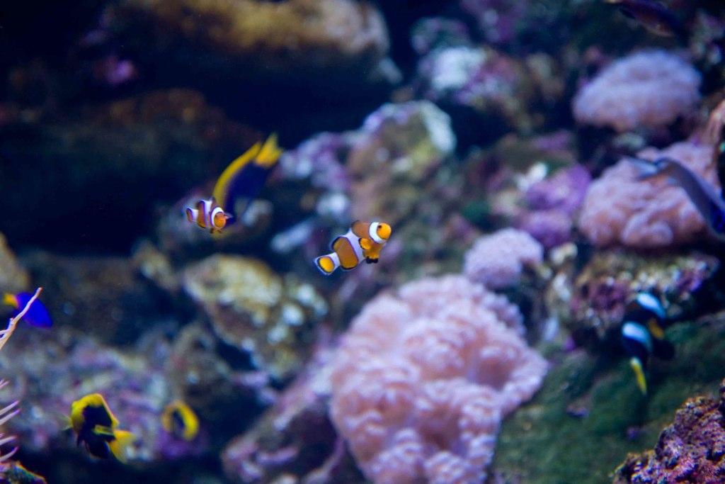 En la Gran Barrera de Arrecifes. Autor, Chris Habegger