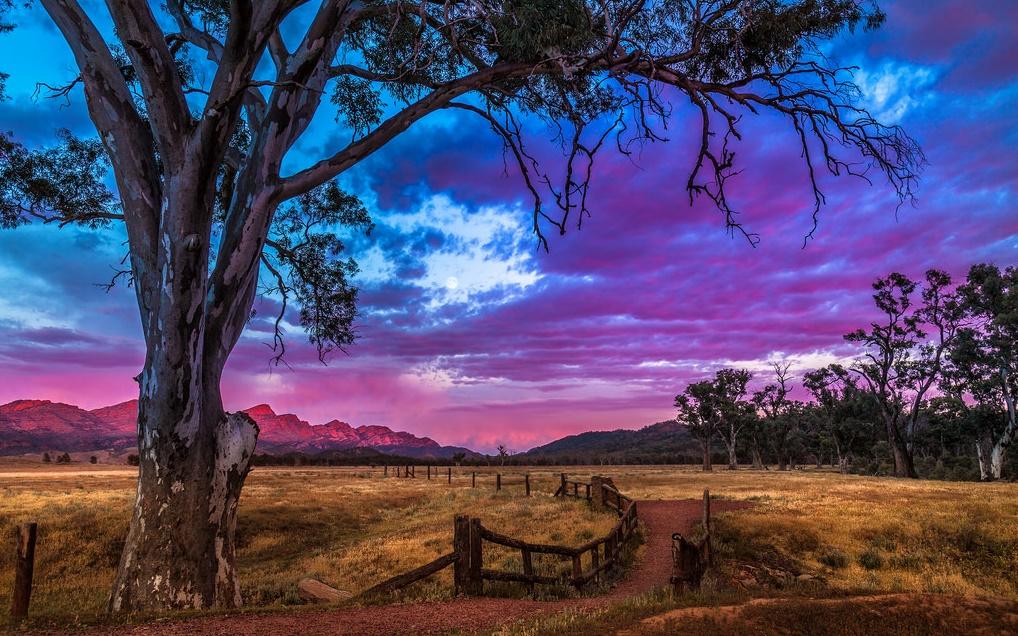 Flinders Ranges. Autora, Jacqui Barker