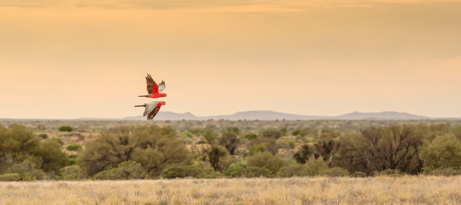 Red arrows in Witjira National Park, Simpson Desert, South Australia. Autor, Henk van den Brink