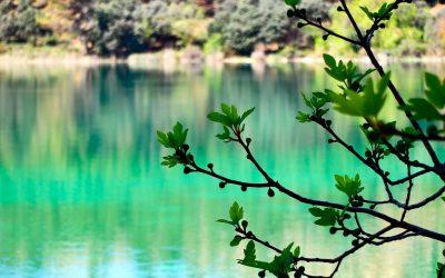 Nuestros bosques, nuestros árboles… nuestra vida