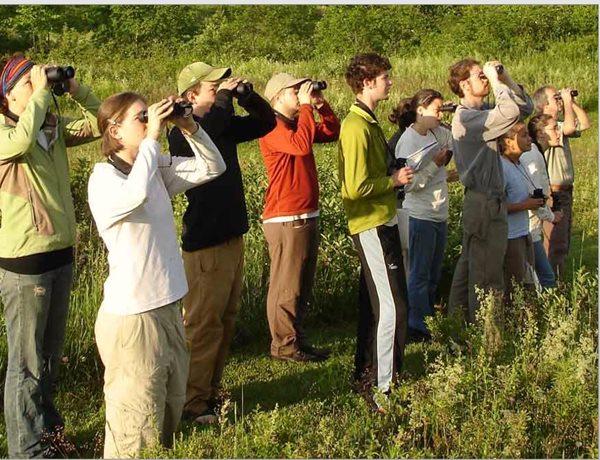 ornitologia-birding-en-tablas-de-daimiel-y-lagunas-de-ruidera