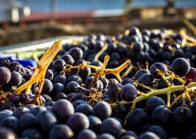 Un día en Tomelloso, Culto al Vino de La Mancha