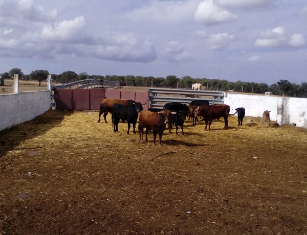 ruta-senderismo-terrinches-toros-bravos-turismo-la-mancha-sabersabor