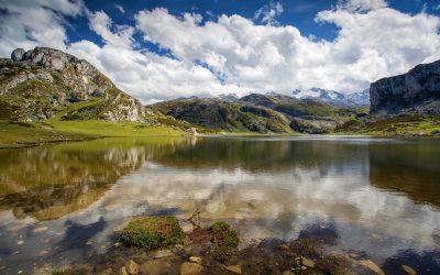 Covadonga, el bosque y los suyos
