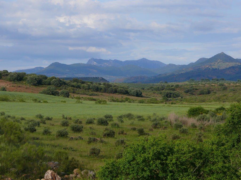 Camino de Anibal Campo de Montiel senderismo interpretativo sabersabor.es