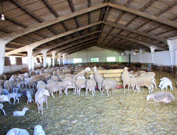 Visita a quesería manchega, lacteoturismo en La Mancha