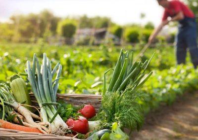De la huerta a la mesa, cultura y cultivo
