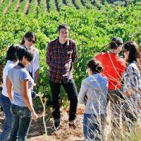 Enoturismo Turismo Enologico en Castilla La Mancha