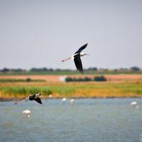 Humedal de La Mancha Mota del Cuervo
